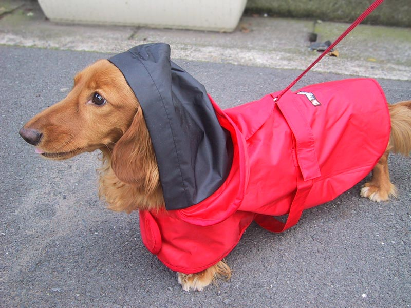 New Nylon Waterproof Pet Dog Raincoat Jacket Reflective Safety Strip Clothes with Hooded for
