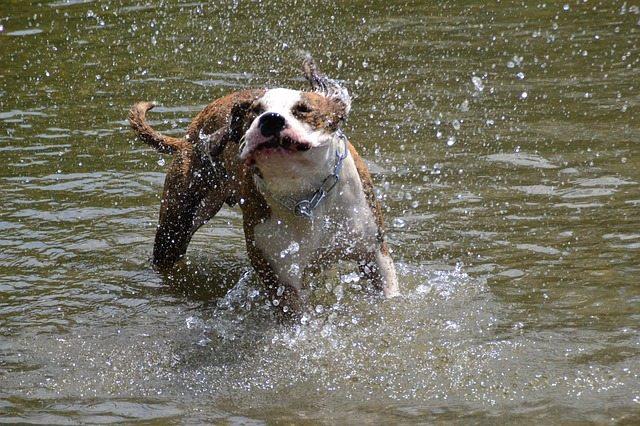 dog-49834_640