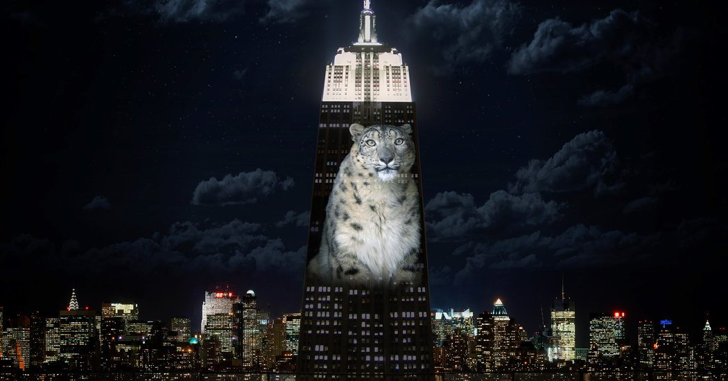 Illuminating Endangered Species Onto The Empire State Building This Saturday