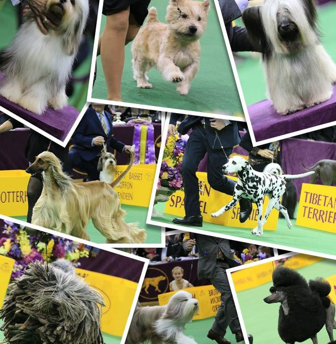 Fox Sports Announces Broadcast Team for 2017 Westminster Dog Show