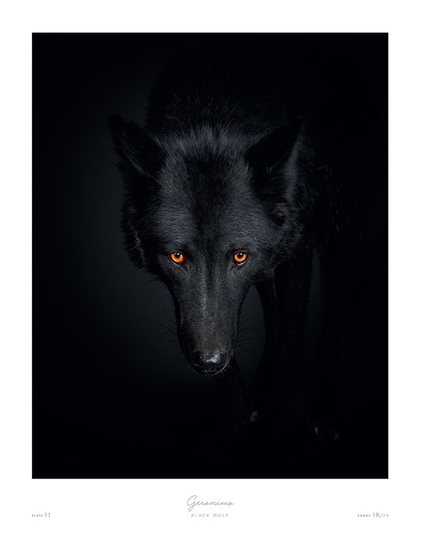 The Animal Kingdom Book