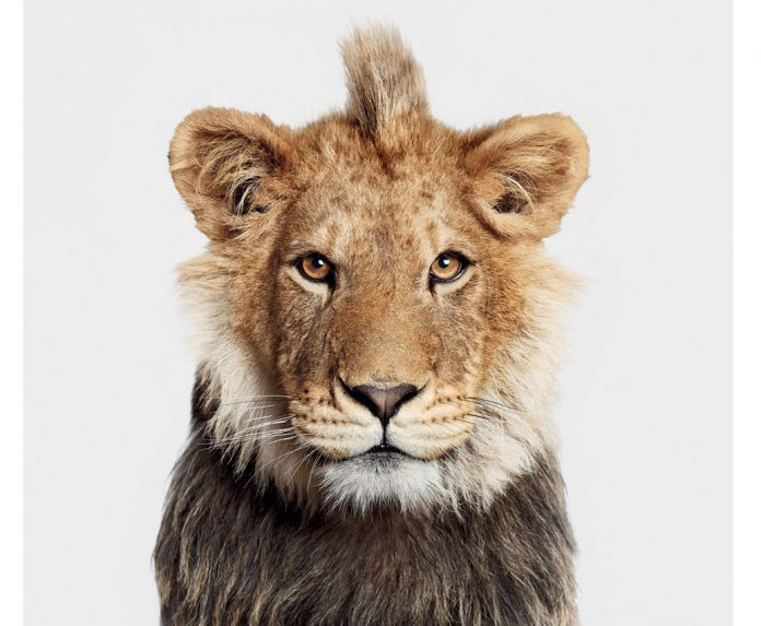The Animal Kingdom by Randal Ford