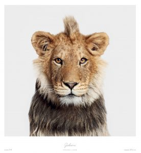 The Animal Kingdom book by Rizzoli.