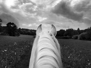 The white horse book