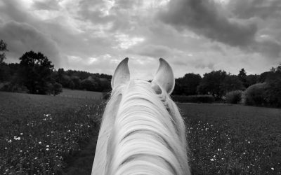 """""""The White Horse"""" by Equestrian and Photographer Mary McCartney"""