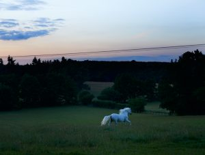 The White Horse in Sussex