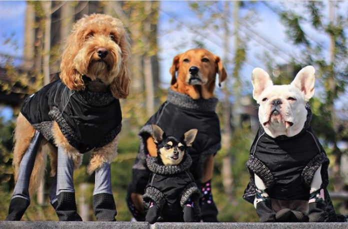 The Rise of NYC's Doggie Leggings